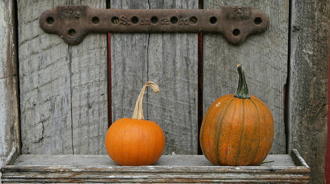 Palouse Fall Pumpkins