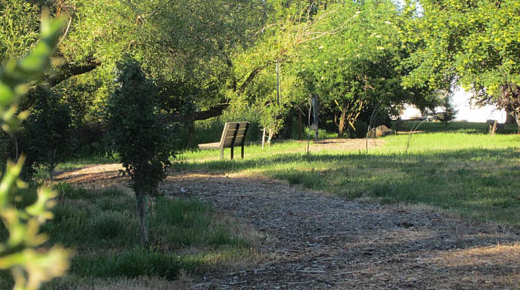 The Palouse Native Plant Walk